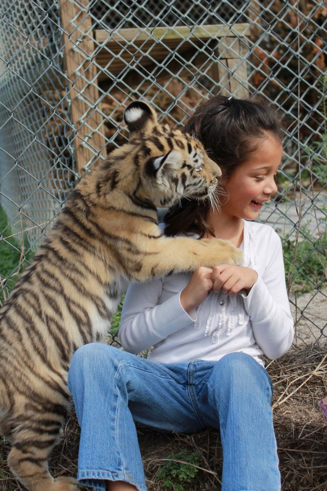 tiger child girl