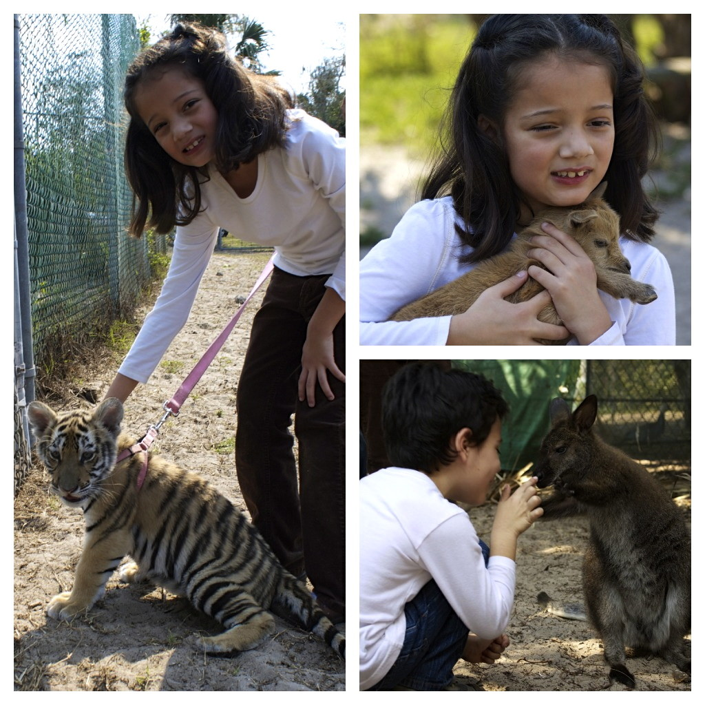 Petting the animals at Kowiachobee Animal Preserve