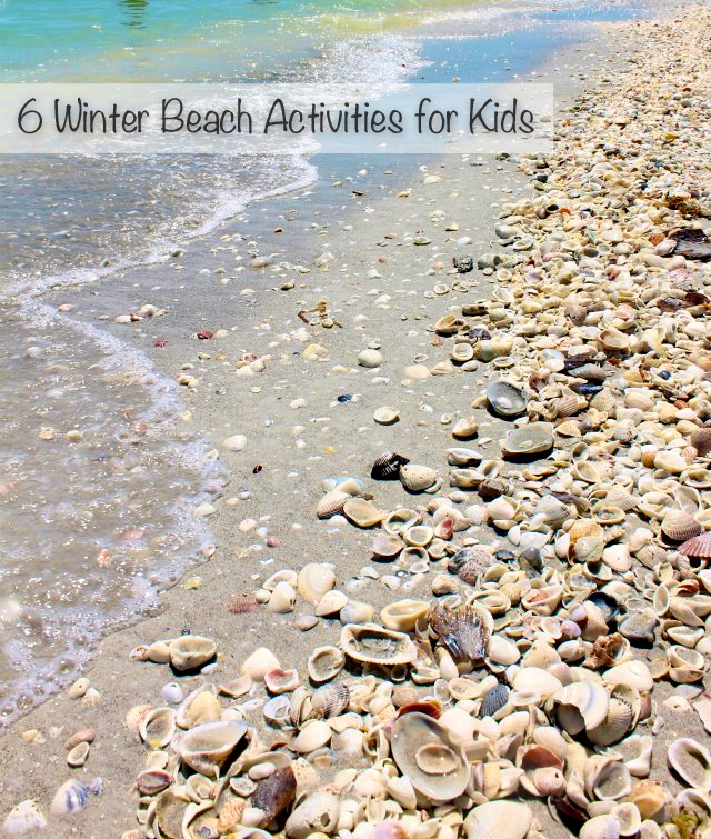 Shell covered beach on Sanibel Island. Image: Growing Up Bilingual.