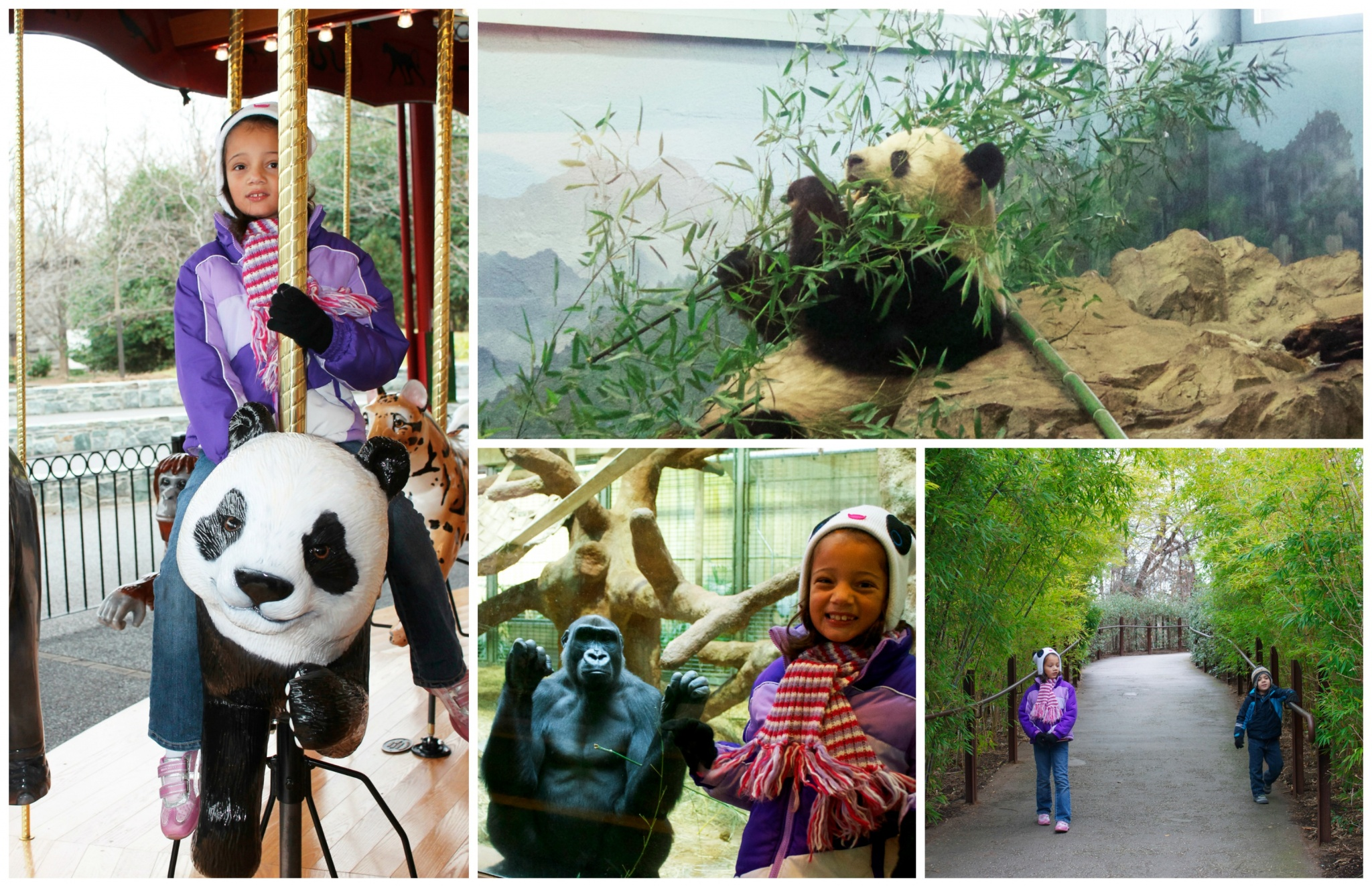 Visiting the Washington D.C. National zoo with kids to see the pandas.