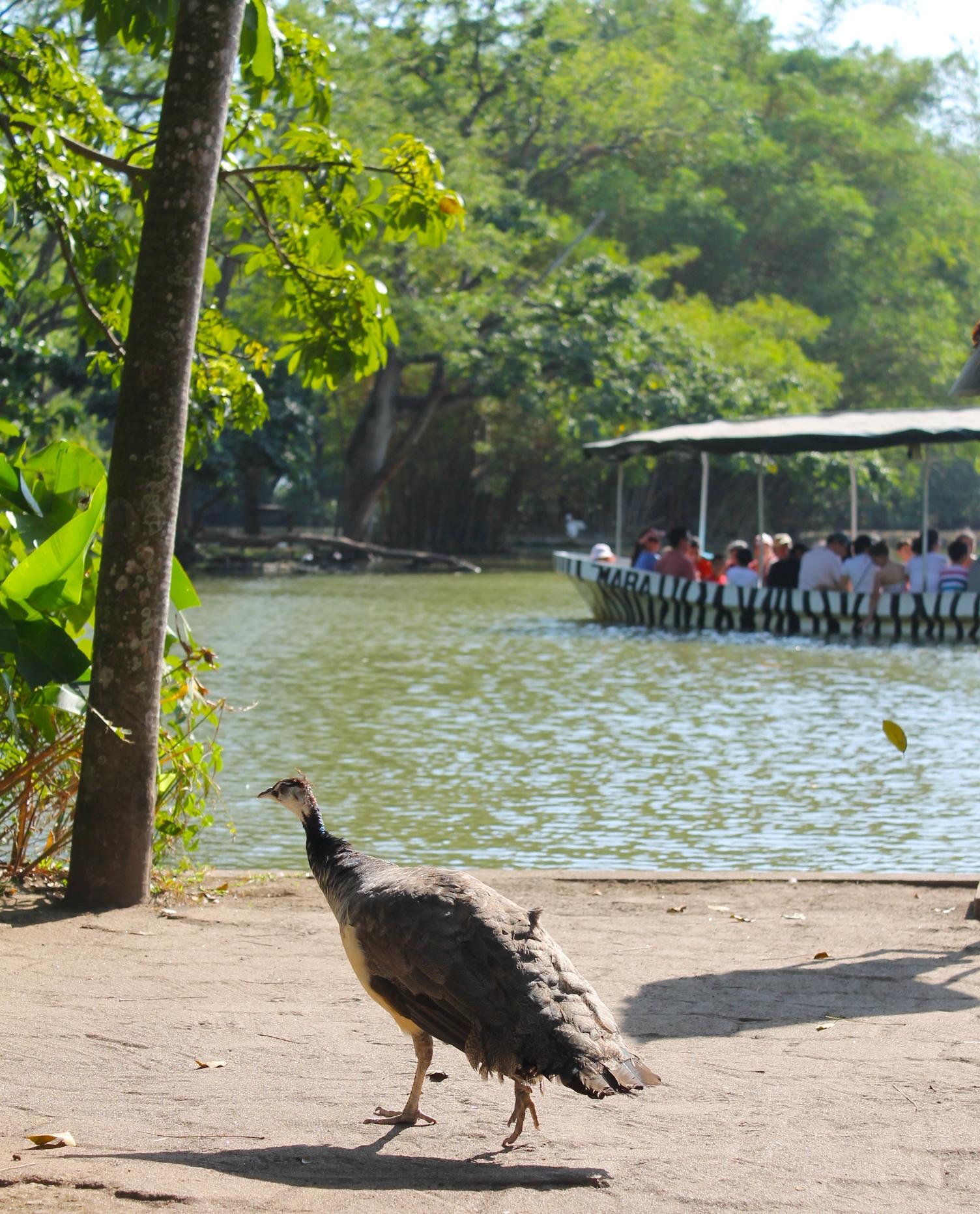 Auto Safari Chapin boat ride Guatemala