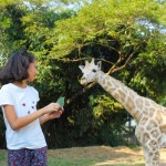 Feeding giraffes at Auto Safari Chapin in Guatemala