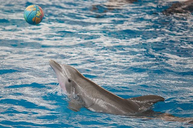 dolphins at Baltimore National Aquarium