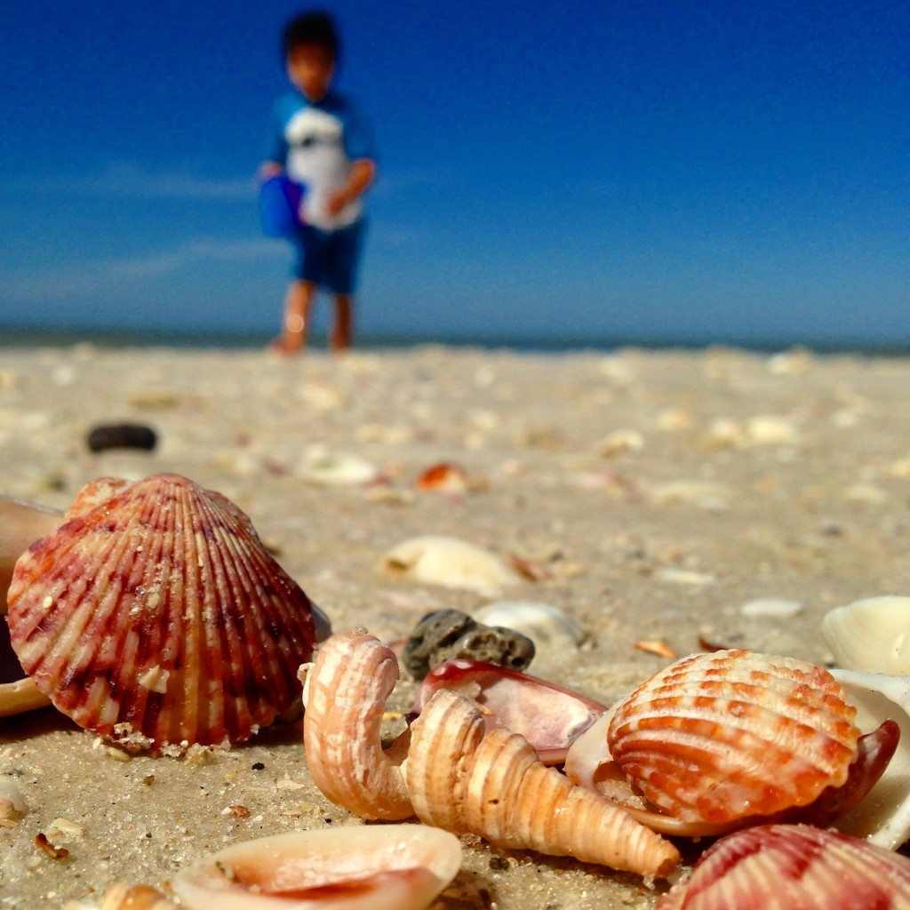 Sanibel Beach: 5 Awesome Things To Do In Sanibel With Kids
