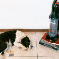 sally_vacuum