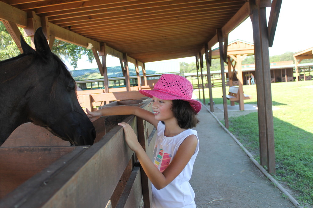 Petting farm at Westgate River Ranch