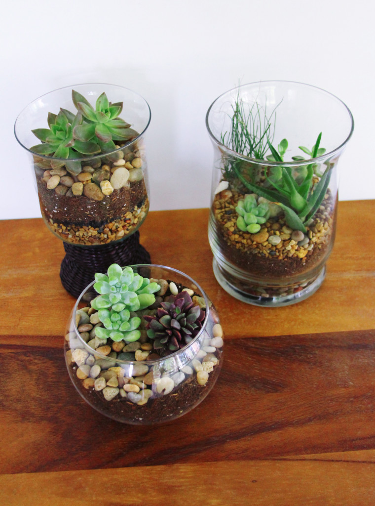 Beautiful And Easy To Make Terrariums