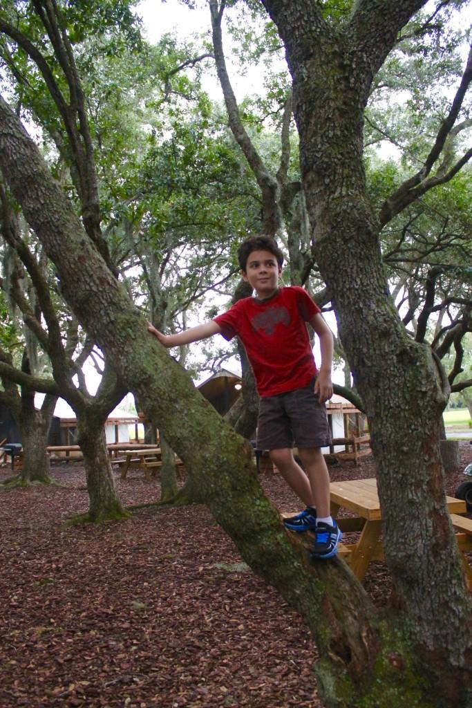 Tree climbing at Westgate River Ranch.