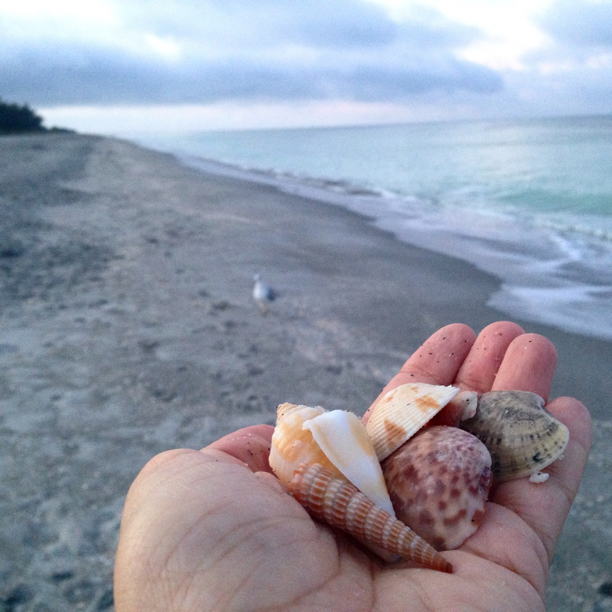 Hand holding shells in Sanibel Island at South Seas Island Resort