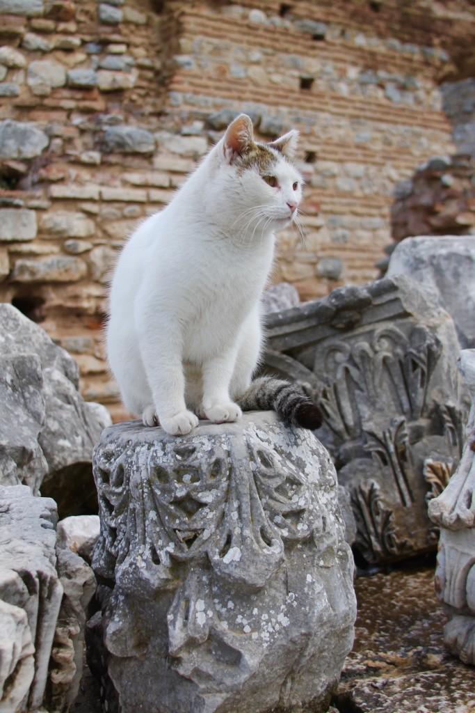 cat in Ephesus ruins, the cats of Turkey