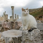 cat at Ephesus ruins, the cats of Turkey