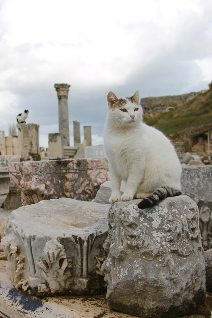 cats in Ephesus Turkey