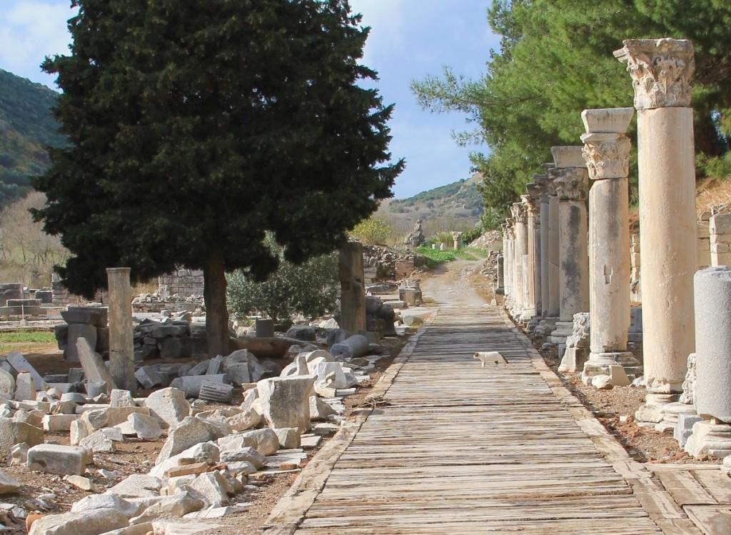 cat at Ephesus ruins, the cats of Turkey