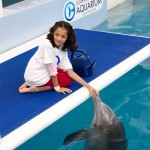 Clearwater Aquarium Hope dolphin interaction