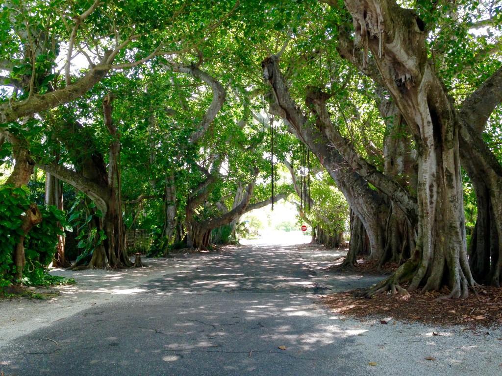 Banyan street in Gasparilla Florida
