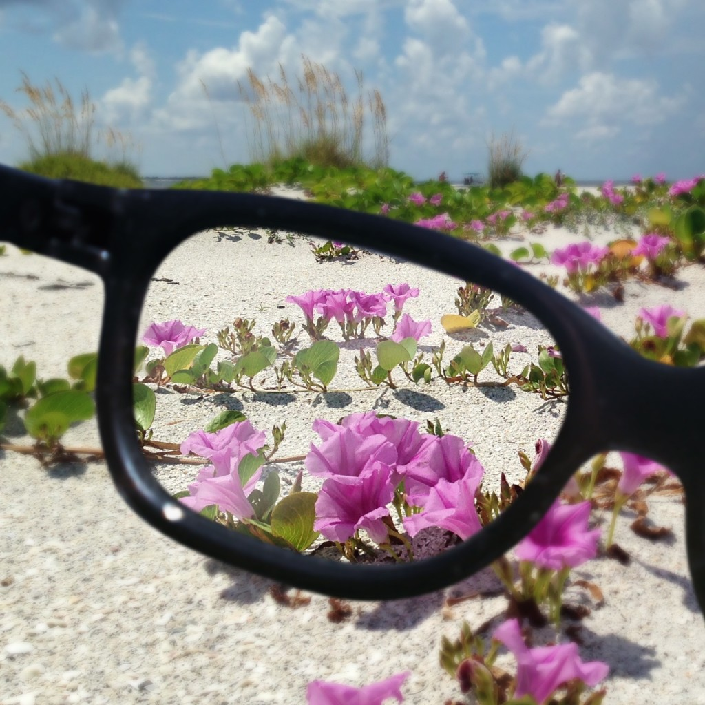 flowers on the beach seen through eyeglasses