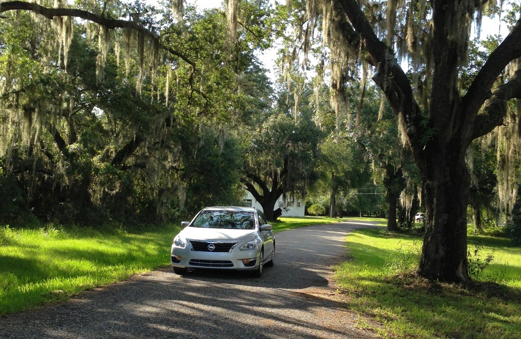 car on a road with spanish moss covered trees