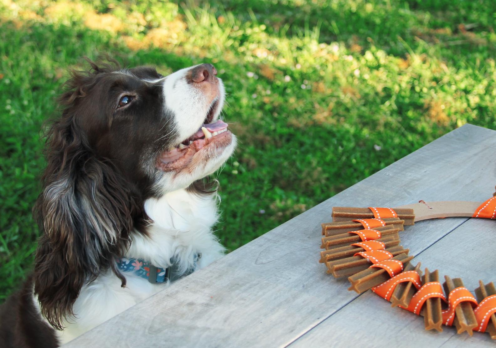 Thanksgiving dog treat wreath