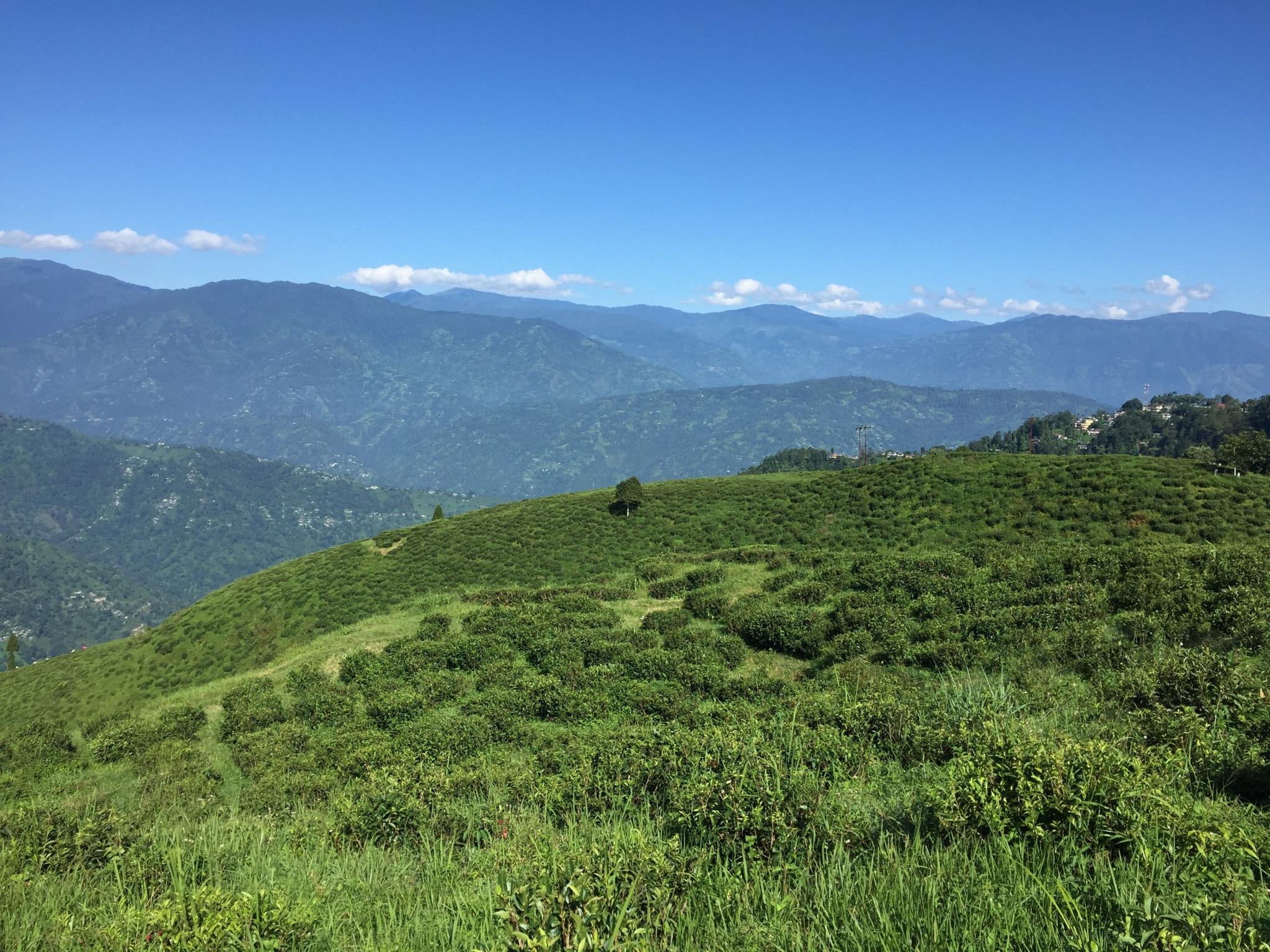 Darjeeling Queen of the Hills Station