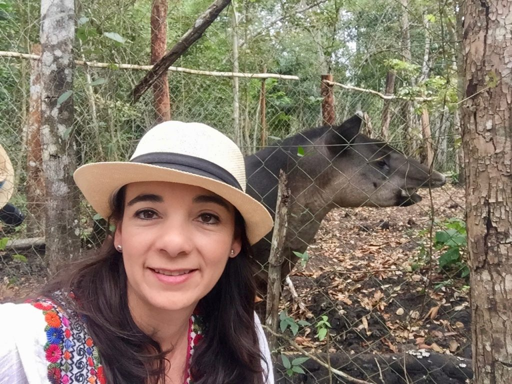 Rescued Tapir now calls Las Lagunas hotel home.