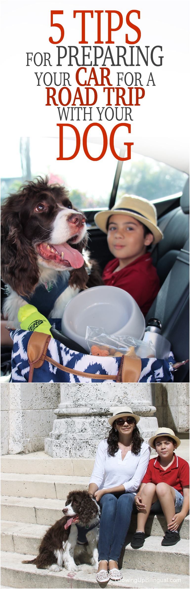 5 Tips For Preparing Your Car For A Road Trip With Your Dog