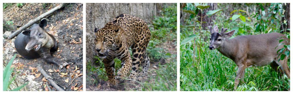 Animals at Las Lagunas hotel's natural reserve