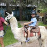 riding a llama at the Lowry Park Zoo Tampa