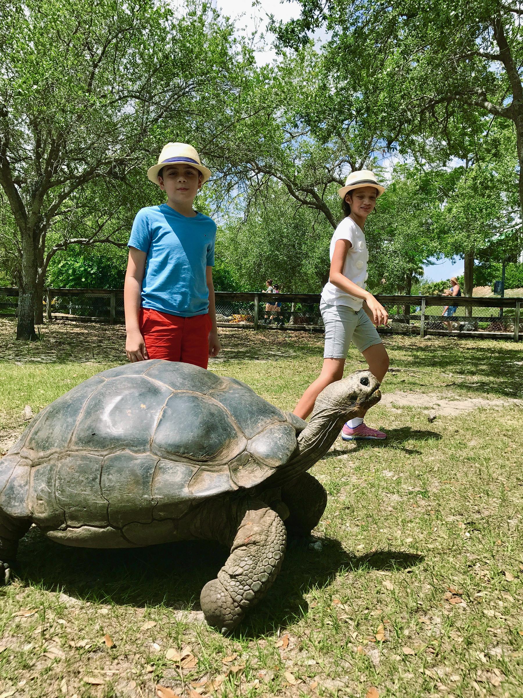 Zoo Miami tortoise feeding