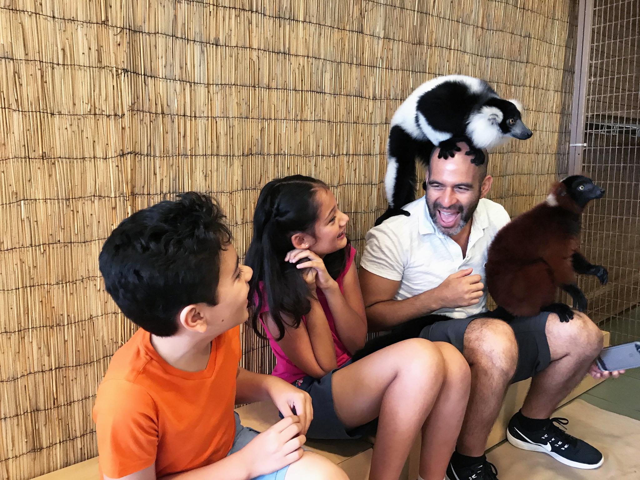 lemur interaction at Jungle Island