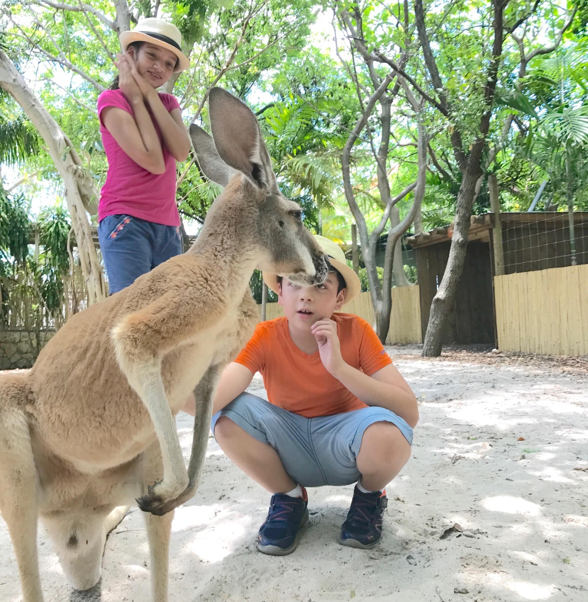 interacting with kangaroo at Jungle Island