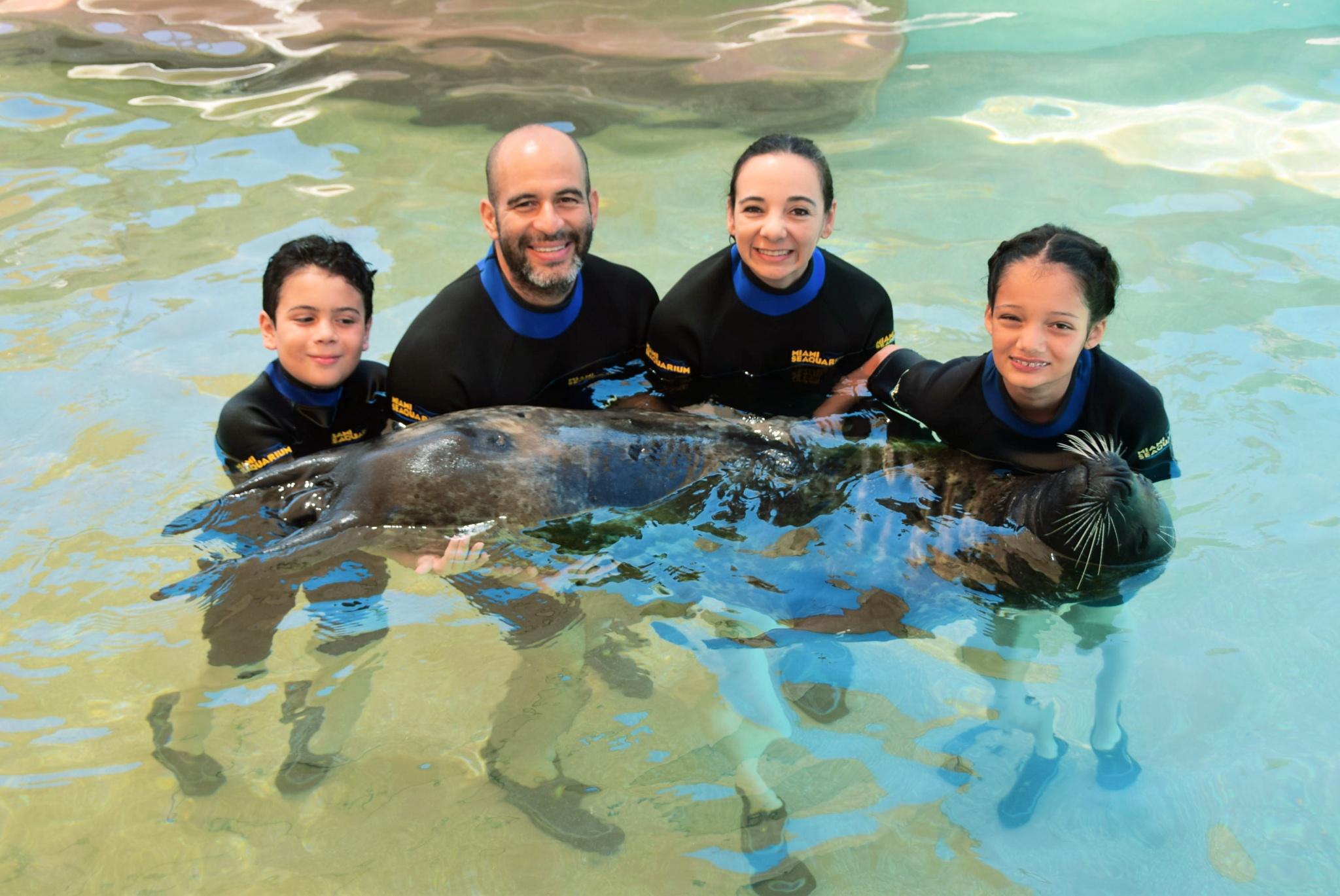 swimming with seals at the Miami Seaquarium