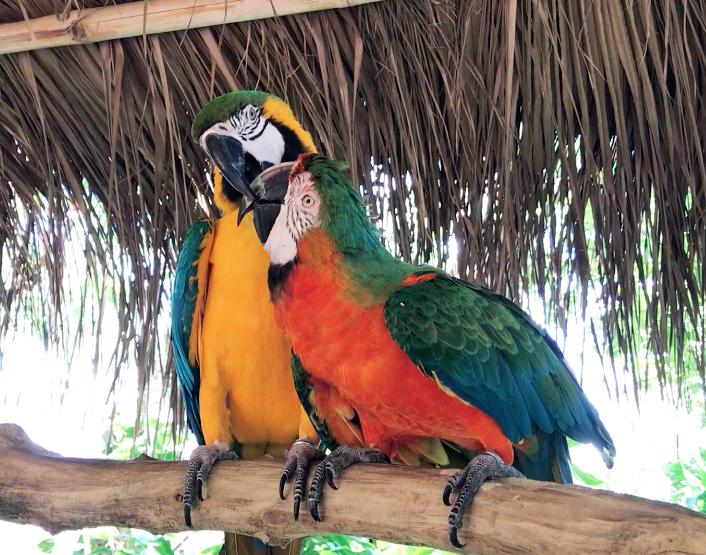 parrots at Jungle Island