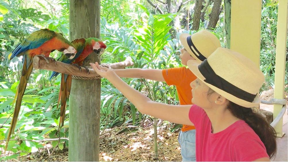 feeding parrots at Jungle Island