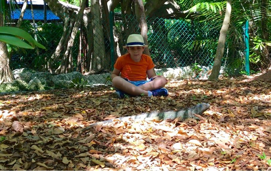 iguana jungle island