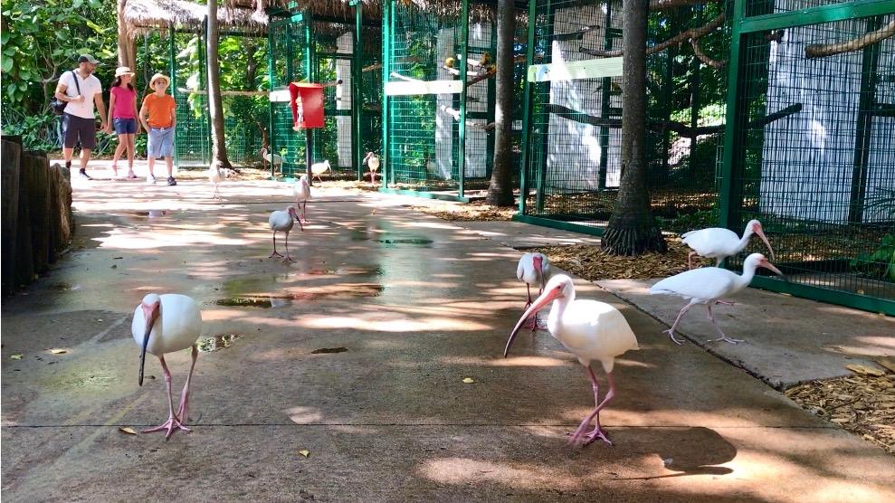 jungle island walkway with birds