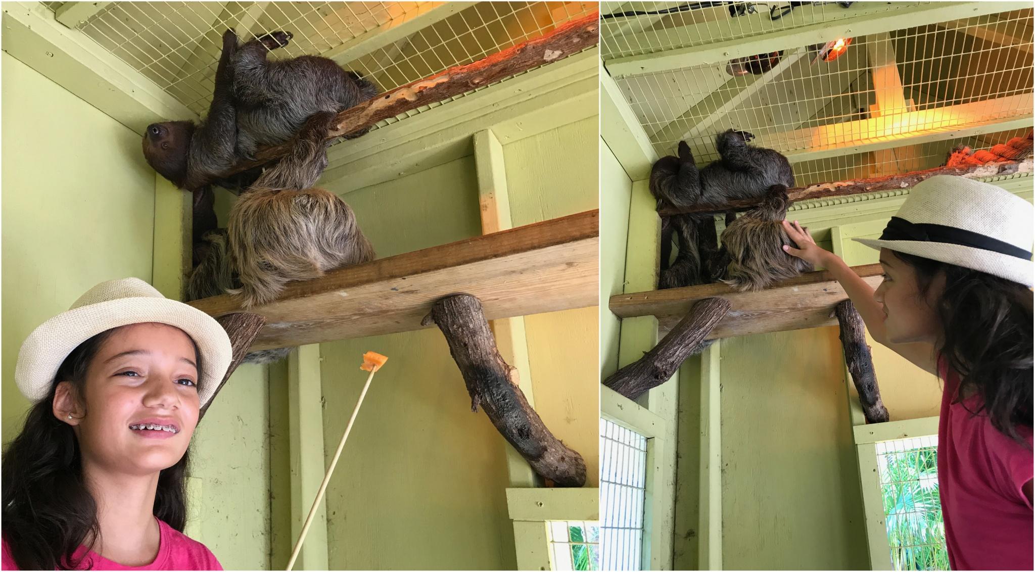 sloth interaction at Jungle Island
