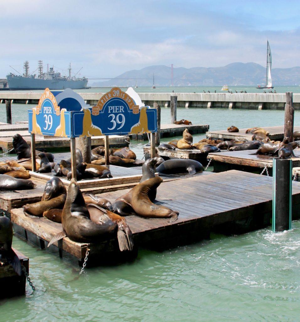 San Francisco Pier 39 sea lions